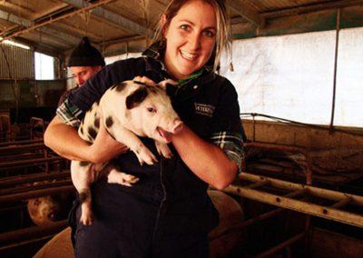 pigs_image
